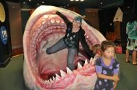 Shark Snack