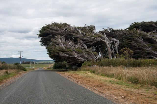 wind tilted
