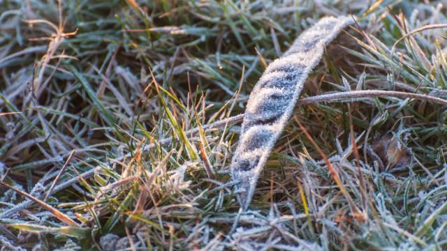 Frozen seed pod