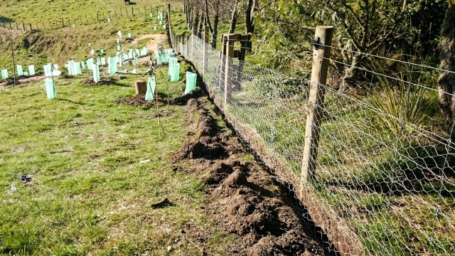 Digging a trench along the existing sheep netting fence
