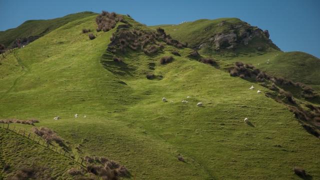 Green sheep hills