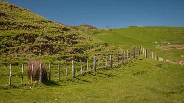 And a typical New Zealand sheep fence