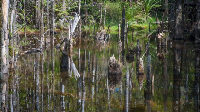 Swamp in the forest