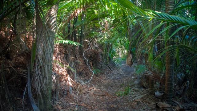 Dense native bush