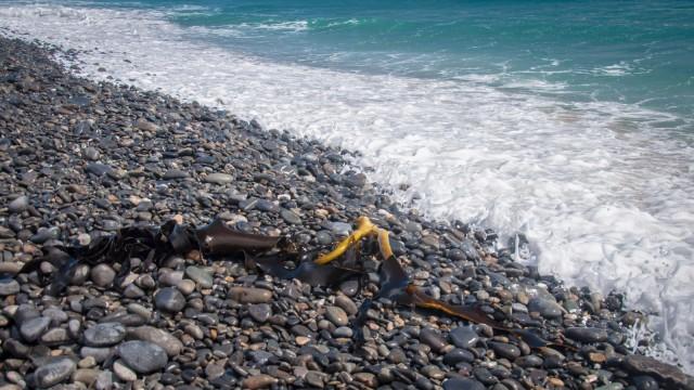 Stranded seaweed