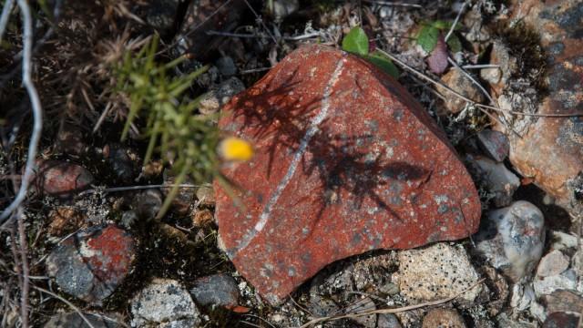 One of many interesting rocks along the walkway