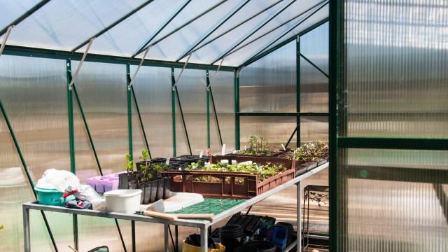 Sneak peek into the greenhouse
