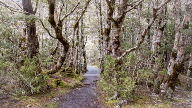 St James Walkway, first 200 mtrs