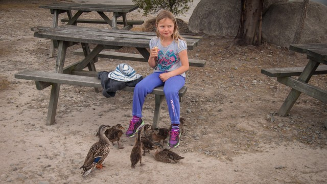 Verena gets surrounded by ducklings.