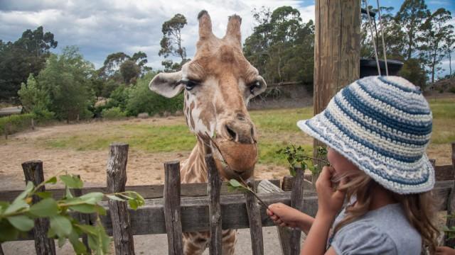 Verena feeds the giraffe!