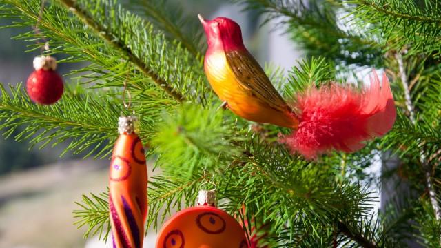 Christmas birds enjoying the sunshine at 8 pm