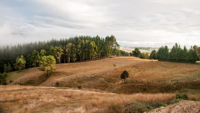 Mid summer landscape