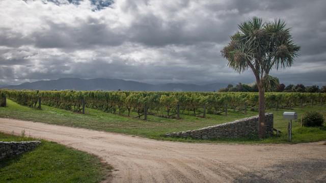 Roadside vinyard.