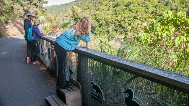 Zealandia is a sanctuary for birds by the city, a real attraction for bird and nature lovers.