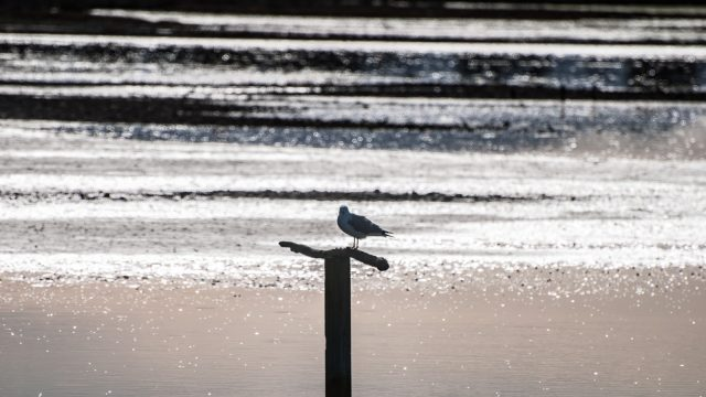 A lonely bird silhouette