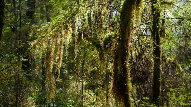 Mossy fairyland trees.